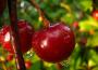 Sprzyjające warunki wegetacji drzew owocowych