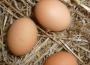 Jaja tanieją, chociaż dalej ich ceny są większe niż przed rokiem