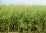 Notowania zbóż i oleistych. Kolejny dzień wzrostów na giełdowym rynku zbóż i oleistych (20.09.2016)