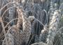 Ceny zbóż (03.01.2021)