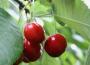 Projekt ustawy o ochronie roślin przed agrofagami