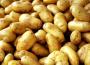Nowe odmiany ziemniaka w krajowym rejestrze COBORU