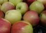 Handel owocami i warzywami