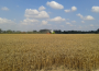 Ceny zbóż na giełdach towarowych (02.05.2021)