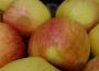Niskie ceny skupu owoców nie rekompensują rolnikom nawet kosztów produkcji