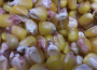 Ceny zbóż na giełdach towarowych (11.10.2020)