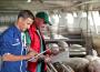 Prognoza cen żywca wieprzowego. We wrześniu ceny powyżej 5 zł/t, potem spadek nawet do 4,5 zł/t
