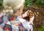 """BREXIT """"bez umowy"""" – zasady obrotu towarami roślinnymi"""