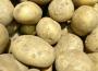 Spadek zbiorów ziemniaków o 13%