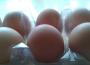 Ceny sprzedaży jaj spożywczych w Polsce (16.10.2016)