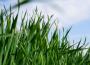Rynek zbóż w kraju (02.05.2021)