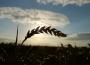 Notowania zbóż w Polsce na tle UE