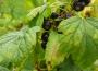 Czy występuje zmowa cenowa na rynku owoców miękkich?