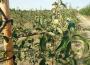 Prognoza sytuacji gospodarstw rolnych