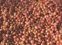 Sezon 2018/2019 będzie wyjątkowy dla rynku cebuli