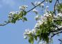 Ocena przezimowania drzew, krzewów owocowych i plantacji jagodowych oraz stan upraw ogrodniczych