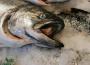 Ceny detaliczne ryb, owoców morza
