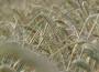 Pszenica i żyto w górę, kukurydza znów tanieje