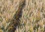 Rynek zbóż w kraju (03.02.2019)