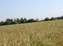 Ceny zbóż w kraju i portach (9.10.2013)