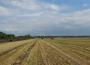 Pogorszenie koniunktury w rolnictwie