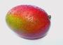 Wzrost produkcji mango