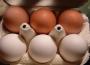 Ceny sprzedaży jaj spożywczych w Polsce (8.01.2017)