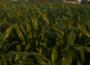 Ceny zbóż na giełdach towarowych (6-12.02.2017)