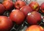 Kolejne letnie odmiany jabłek na rynku