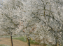Przymrozki wiosenne - potrzeba zmian systemu ubezpieczeń