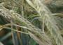 Ceny zbóż w kraju (02.05.2021)