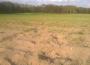 Susza rolnicza pośród wszystkich monitorowanych uprawach