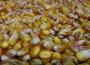 Ceny zbóż na giełdach towarowych (24.11.2019)
