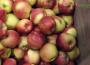 Produkcja jabłek w UE w 2018 r.