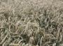 Ogólne wyniki produkcji na tle warunków atmosferycznych
