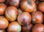 Ceny cebuli w Polsce (11.10.2019)