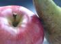Od 6 kwietnia można składać powiadomienia o zamiarze wycofania owoców z rynku