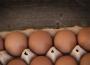 Ceny jaj spożywczych w Polsce (19.07.2020)