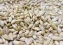 Ceny zbóż (03.02.2019)
