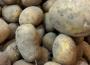 Na unijnym rynku drożeją ziemniaki