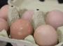 Ceny jaj spożywczych w Polsce (13.06.2021)