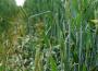Notowania zbóż i oleistych. Spekulanci zrealizowali zyski z krótkich pozycji (27.09.2016)