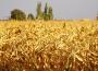 Susza rolnicza obserwowana w 6 województwach