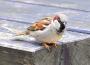 Stwierdzone przypadki wysoce zjadliwej grypy ptaków (HPAI) u dzikich ptaków w 2021 r. w Polsce