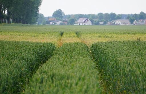 Rynek zbóż w kraju (02.04.2017)