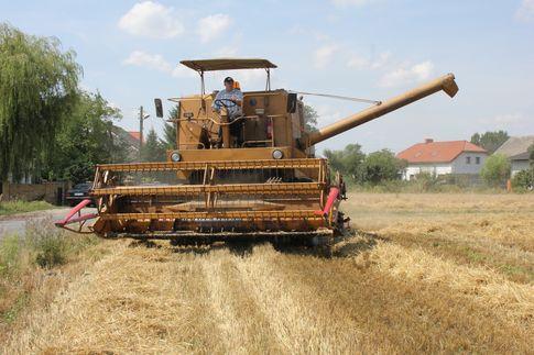 Ceny zbóż. Niewielkie odbicie w punktach skupu