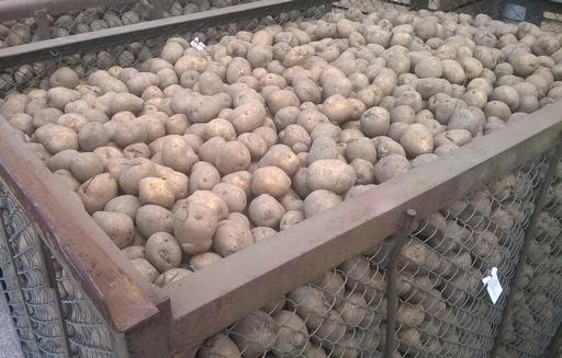Spadek cen ziemniaków
