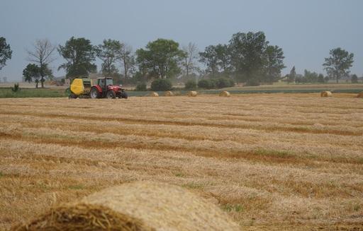 Rynek zbóż w Polsce i na świecie (08-14.09.2014)
