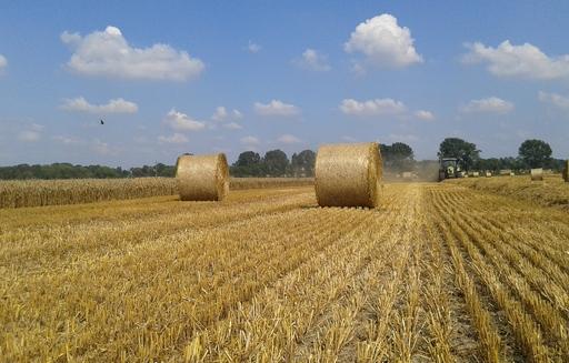 Soja i kukurydza odbiły nieco w górę