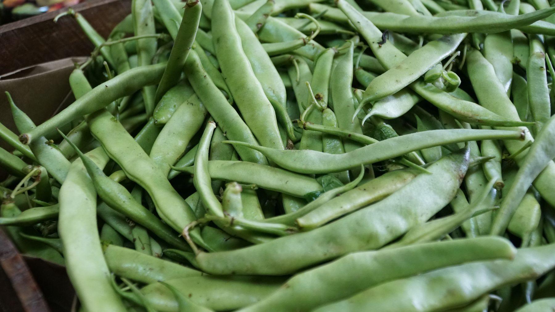 Fasola zwykła, fasola zwyczajna (Phaseolus vulgaris L.)